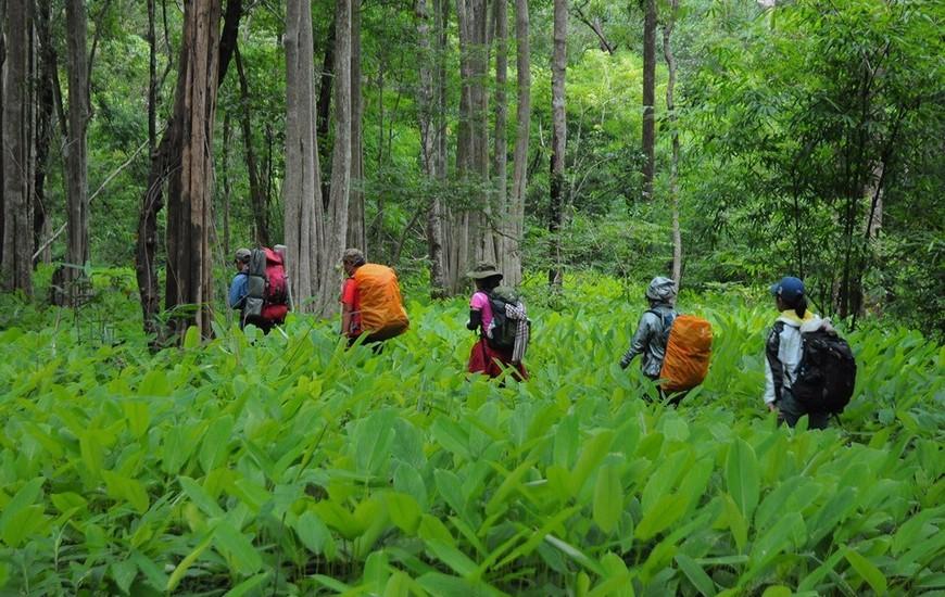 Trekking in Ta Nang - Phan Dung