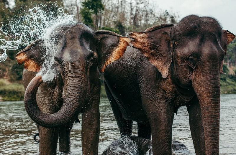 Elephant Village Sanctuary - best places to visit in Laos