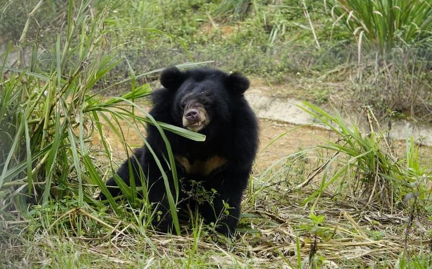 Bear Sanctuary in Ninh Binh