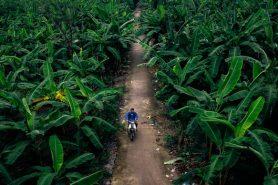 Hanoi Banana Island